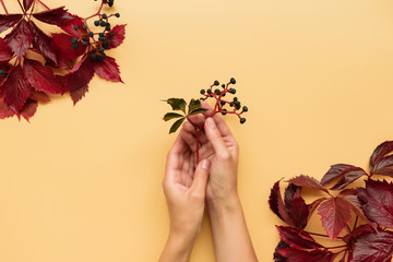 Woman's hands holding red leaves of girlish (wild) grape or parthenocissus on orange background....