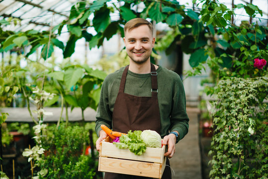 Attractive farmer man in apron standing in greenhouse holding wooden box of organic food looking at camera with happy face. People, work and nature concept.