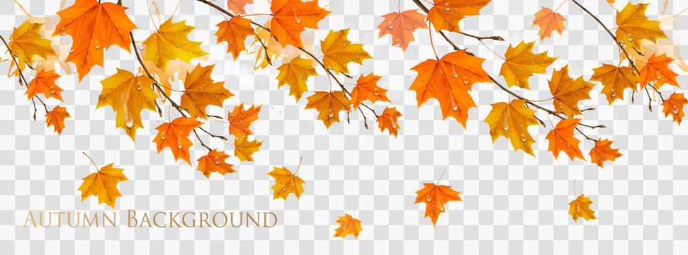 Nature autumn frame with colorful leaves and raindrops on transparent background. Vector