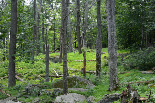Quiet forested area in the Appalachian mountains