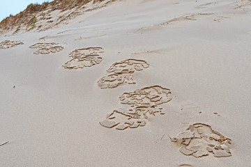 Footprints across a wet sand dune in Canada's Madeleine Islands have dried to form an interesting pattern