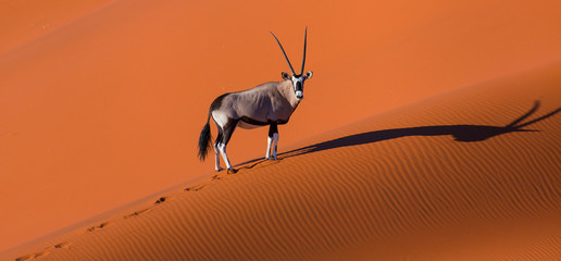 Oryx photos, royalty-free images, graphics, vectors & videos ...