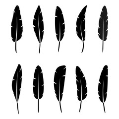collection of vector black silhouette of feathers on white background