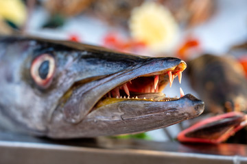Close up on barracuda teeth. Sea fresh fish barracuda at street food market . Seafood concept. Raw barracuda for cooking