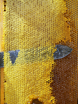 wax sealed bee frame with honey, knife wax removal