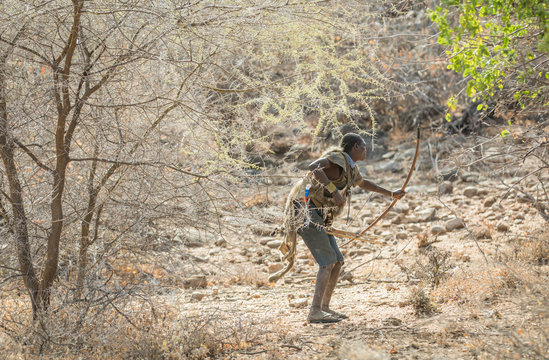 hadzabe man hunting with his bow and arrows