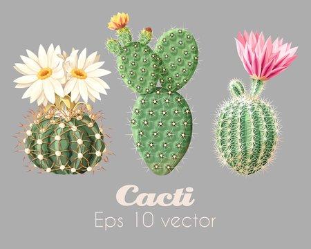 Vector illustration set of high detailed cacti