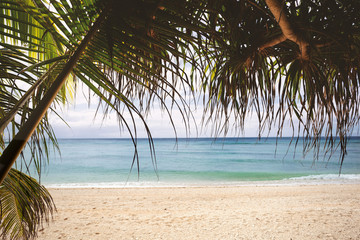 Fototapete - Tropical beach with sandy shore and blue water through palm tree leaves