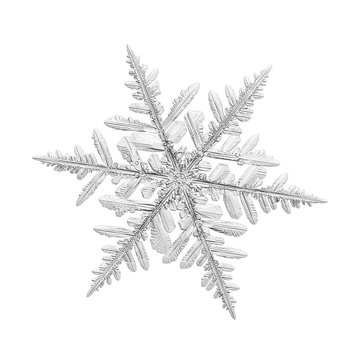 Snowflake isolated on white background. Macro photo of real snow crystal: elegant stellar dendrite with glossy surface, fine hexagonal symmetry, complex inner structure and six flat, fragile arms.