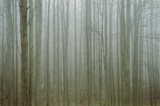 thin tree line