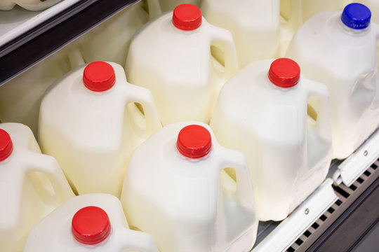 Several gallon jugs of milk at the grocery store