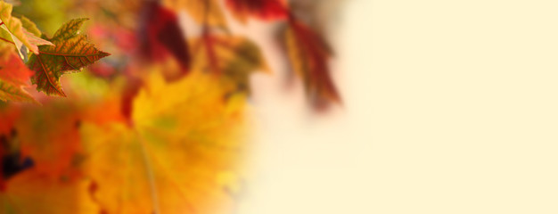 Autumn Leaves On Smoothly Blurred Light Background