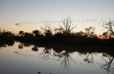 The Diamantina river at Birdsville Queensland at sunrise..
