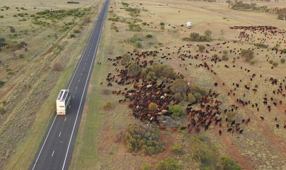 cattle muster outback queensland, Australia