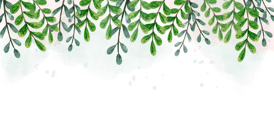 Watercolor drawing of green hanging leaves. Look beautiful and refreshing. Aim used for wallpaper background and web banner