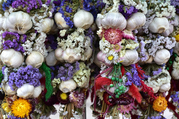 Garlic bunch: Garlic plait with flowers.   Group of bunch. Autumn home decoration.