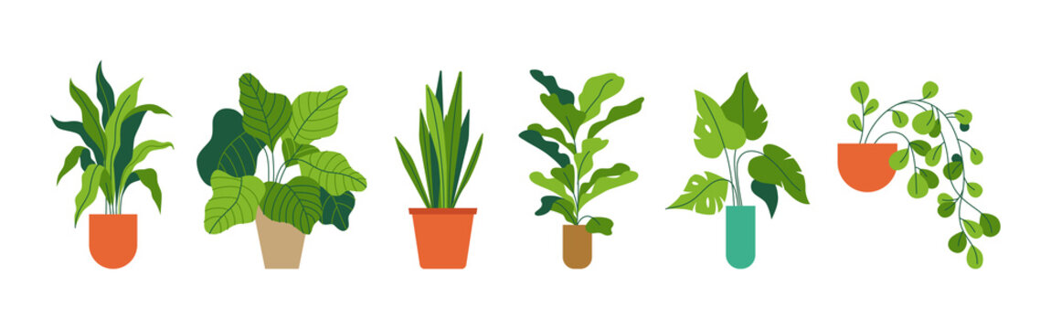 Decorative green houseplants in pots and planters, natural home decor and urban jungle