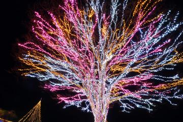 Illumination at Nagaoka Kyuryo Park, Niigata, Japan