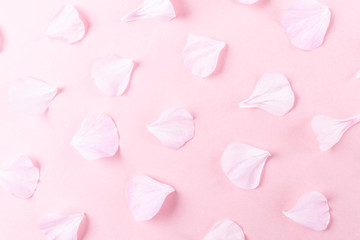 Pink geranium petals on a pink background. Stylish minimalistic image, flat lay, top view. The concept of Valentine's Day, Women's Day, romance, wedding. Place for text.