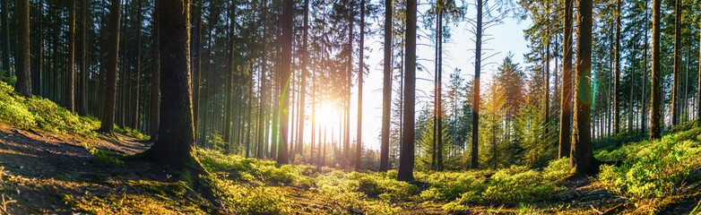 Spoed Fotobehang Bomen Silent Forest in spring with beautiful bright sun rays
