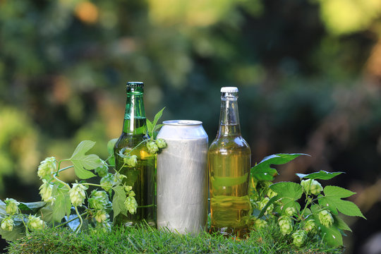 beer bottles and hops plant outdoors