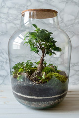 Small decoration plants in a glass bottle on a table in scandinavian interior/garden terrarium bottle/ forest in a jar. Terrarium jar with piece of forest with self ecosystem. Save the earth concept