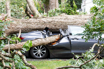 Car crushed by tree during hurricane