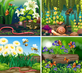 Set of background scene with flowers and insects in the woods