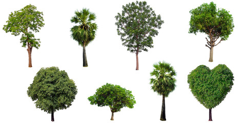 The collection set of trees Isolated on a white background, large images are suitable for all types of art work and print.