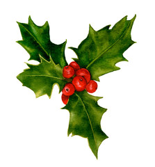 A holly branch with red holly berries hand drawn in watercolor isolated on a white background. Design element for patterns, wreathes and frames in floral style.