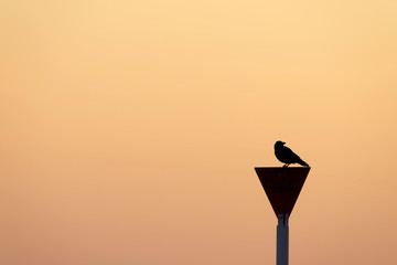 The silhouette of a crow bird on a road sign. Focus on the right.
