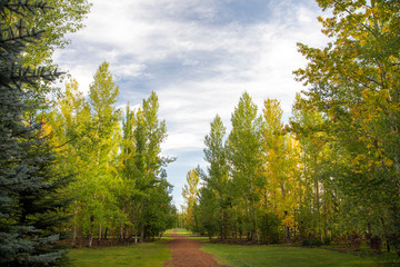 A path through forest with yellow fall foliage in the trees, serene view with blue sky