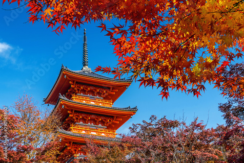 Wall mural Red pagoda and maple tree in autumn, Kyoto in Japan.