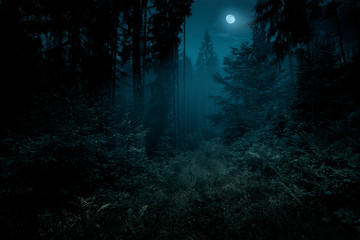 Fotobehang Weg in bos Full moon over the spruce trees of magic mystery night forest. Halloween backdrop.