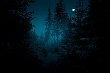 Photo Stands Road in forest Full moon through the spruce trees in magic mystery night forest. Halloween backdrop.