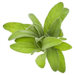Fototapete - Sage herb leaves  bouquet isolated on white background cutout.