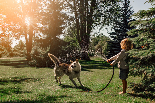 Girl and dog playing with hose