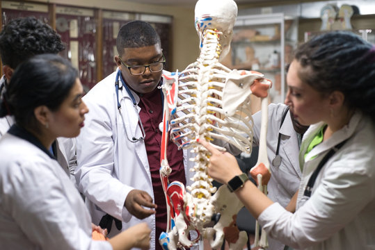 medical students study the structure of man, on the skeleton. A group of young people of different sex, mixed race, in medical clothes, in the classroom
