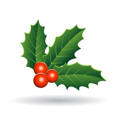 Holly Berries with Green Leaves Illustration