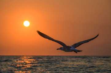 Recess Fitting Bird flying bird seagull in the sky sea sunset