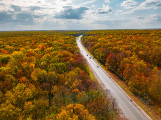Road in autumn forest, cloudy sky, aerial view Wall mural