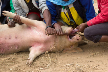 Pig on a local Malagasy market is being inspected