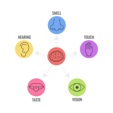 Icon set of five human senses. Simple line icons. Vector illustration.