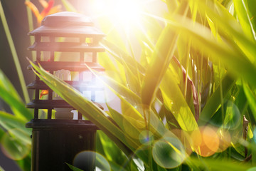 Wall Mural - Beautiful sunrise in the park..Garden light and backyard landscape refreshment with sunray and golden bokeh.
