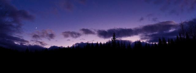 Evening landscape on the background of the forest. Carpathians. Ukraine