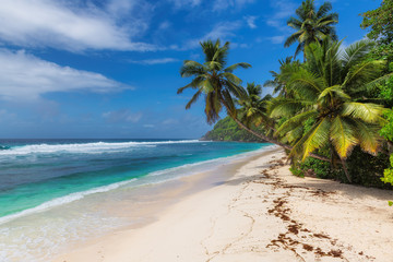 Fototapete - Paradise beach. Coconut palms over sandy beach with and turquoise sea.