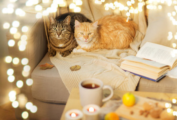 Fototapete - pets and hygge concept - two cats lying on sofa at home in winter