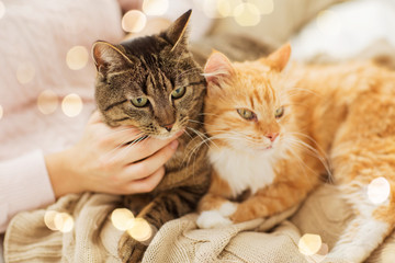 Fototapete - pets, hygge and people concept - close up of female owner with red and tabby cat in bed