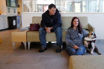 Moose, a six-year-old English Bulldog waits, with his owners to receive trial medical treatment in North Grafton