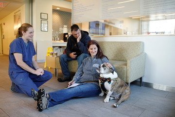 Moose, a six-year old English Bulldog with B-cell lymphoma, waits to receive trial medical treatment at the Tufts Veterinary Medical School